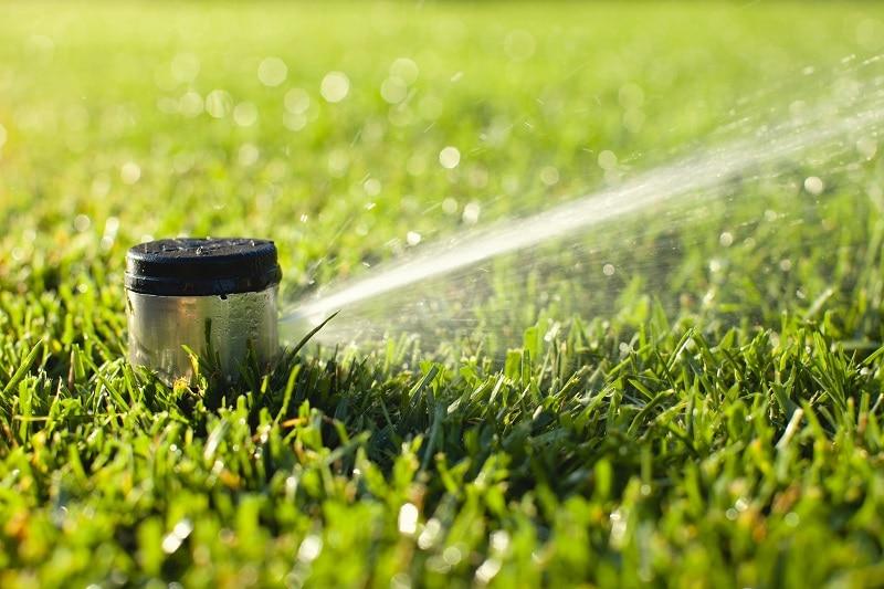 Spraying grass in morning